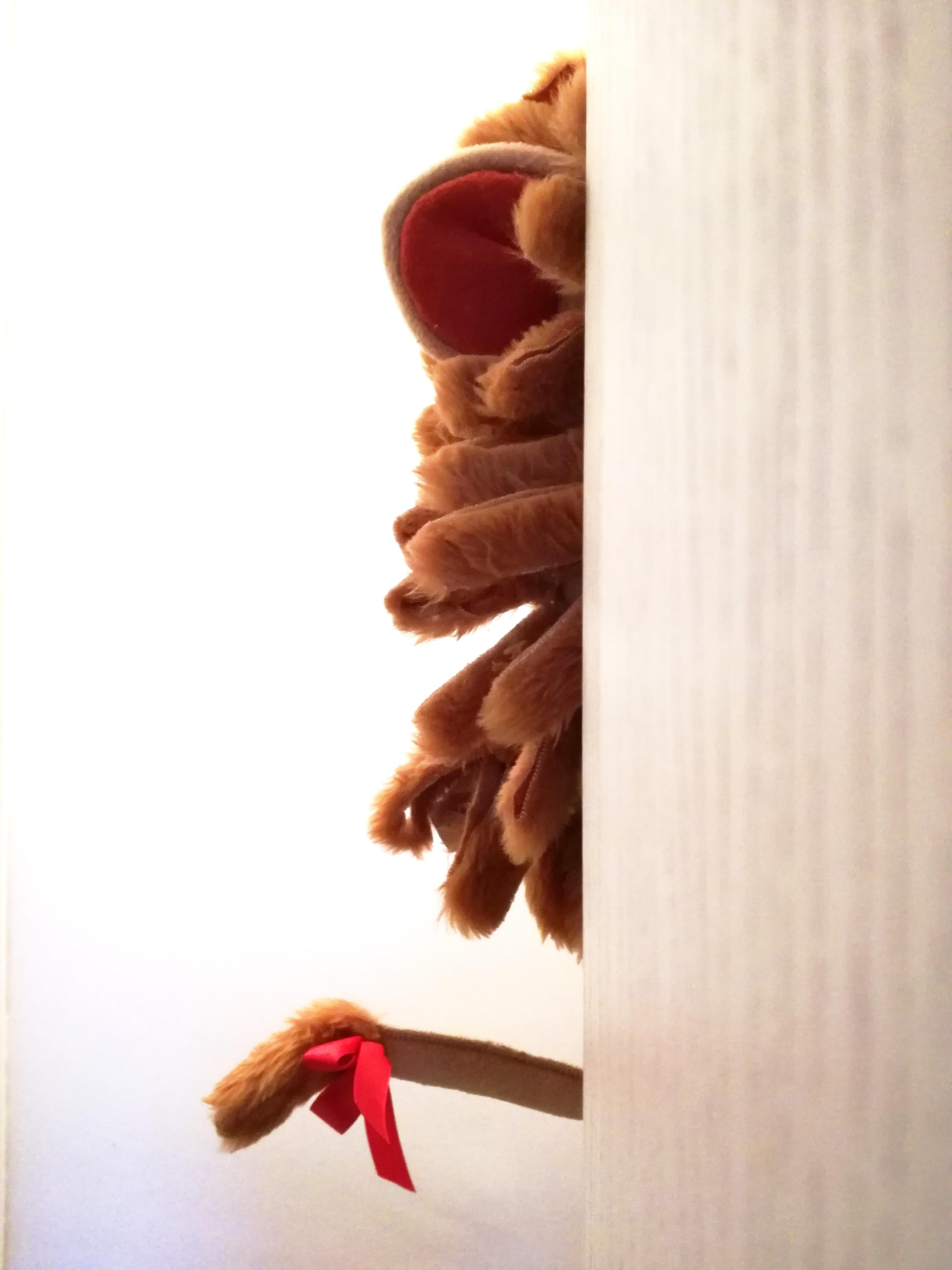 costumi di carnevale bambini leone